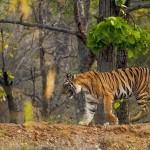 Tadoba+Andhari+Tiger+Reserve